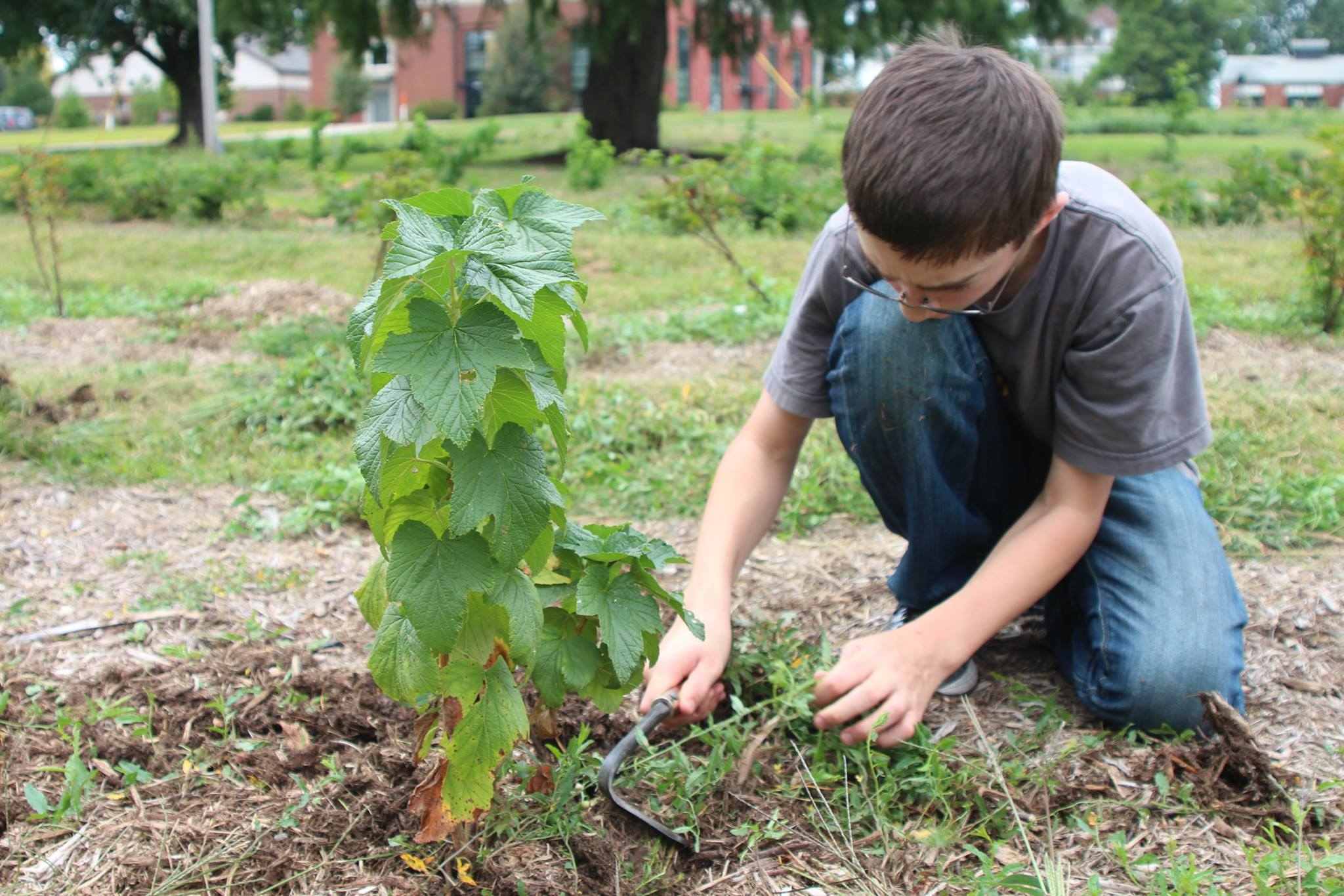 youth help plant tree at the Food Forest in Normal, IL
