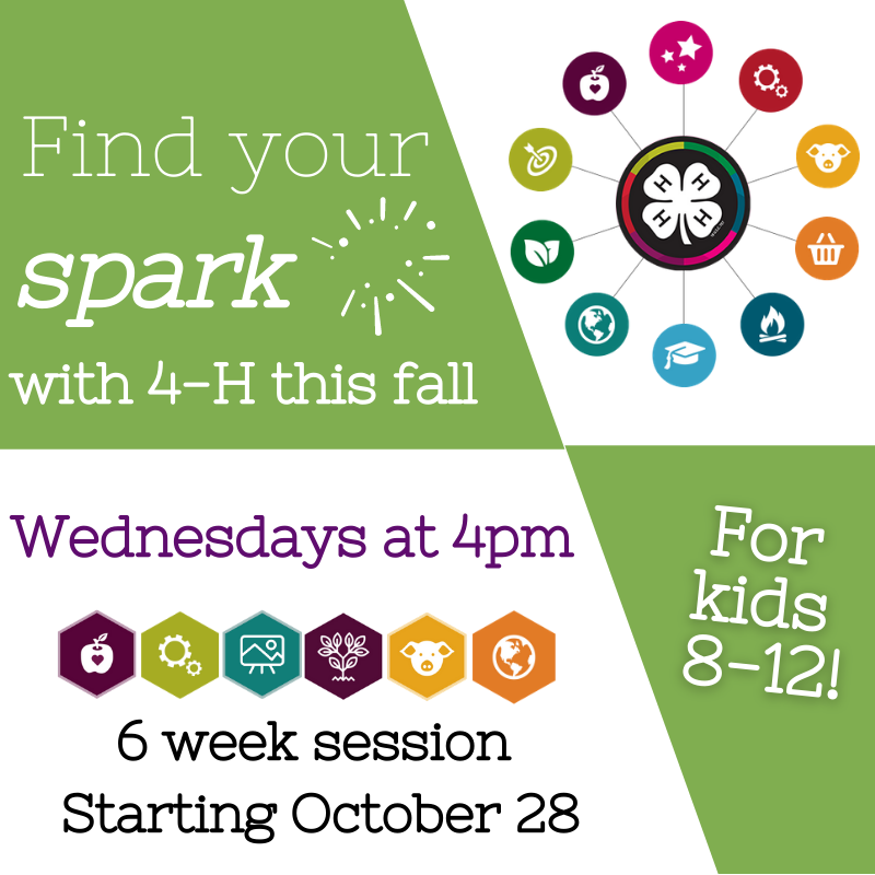 find your spark graphic