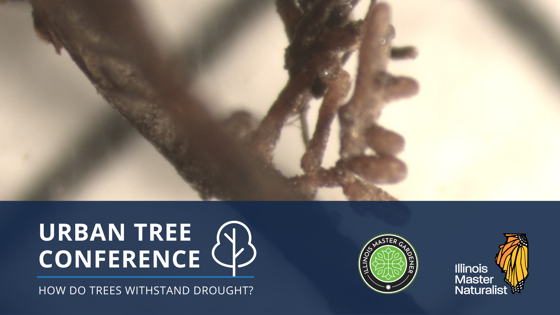 Urban Tree Conference: How do trees withstand drought?