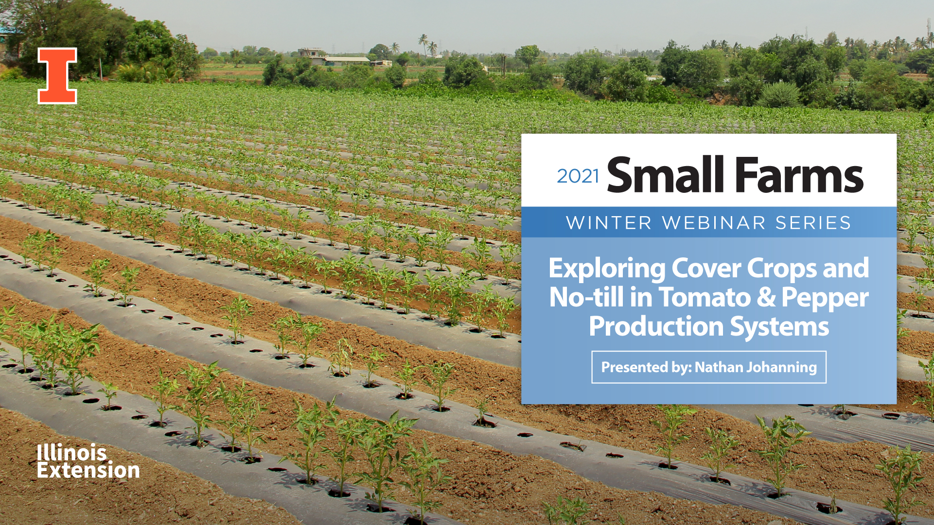 Exploring Cover Crops and No-till in Tomato & Pepper Production Systems