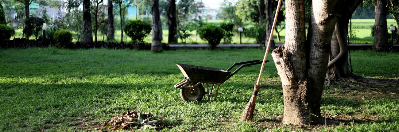 Grass and wheelbarrow