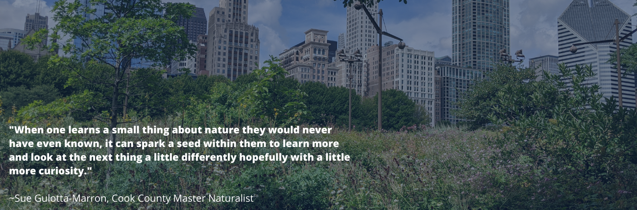 skyscrapers and plants with inspirational quote