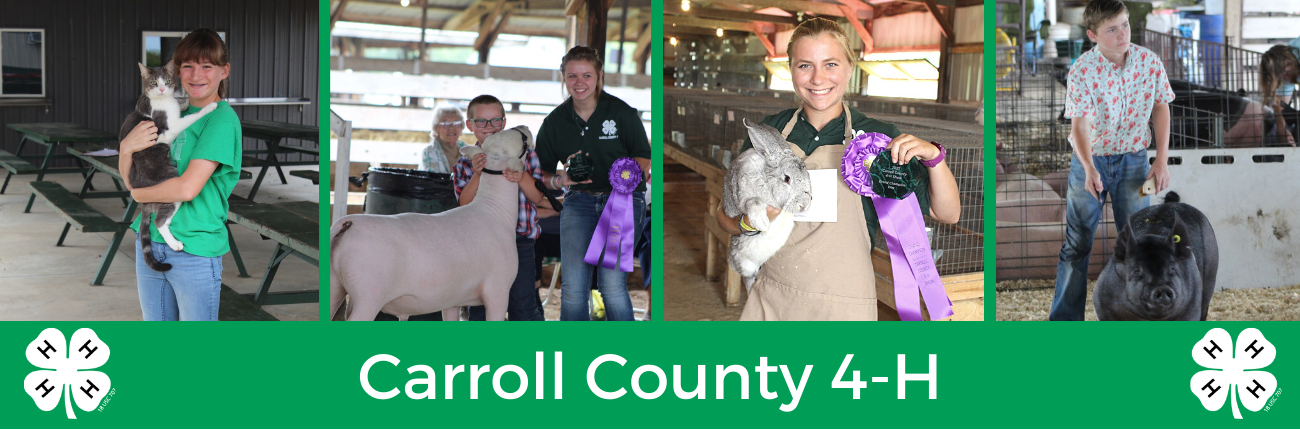 4-H members showing projects and enjoying the county fair