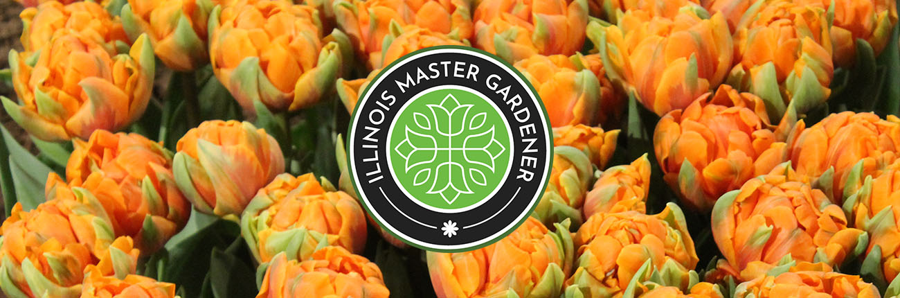 MG logo with tulip