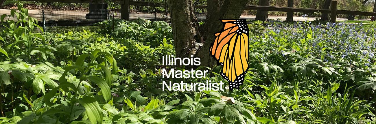 Mayapple plant with Master Naturalist Logo