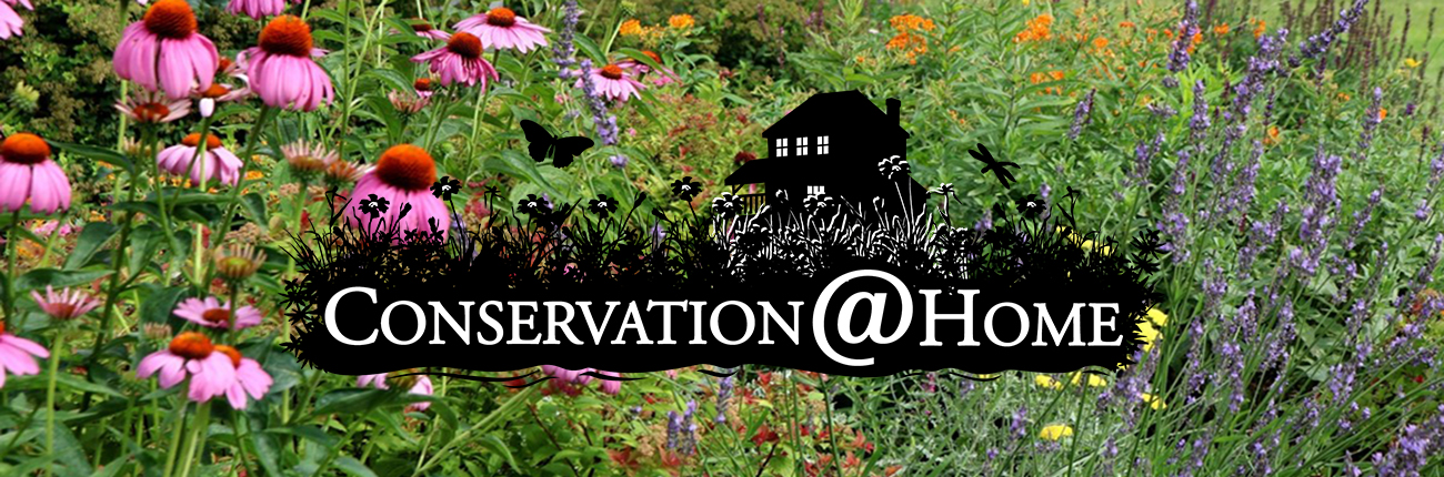 Conservation@Home logo with native plants