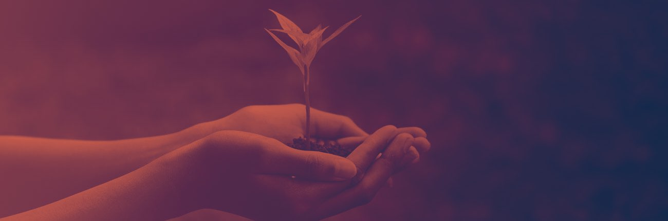 Hands holding a growing plant