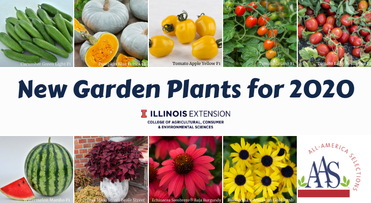 pictures of the 2020 AAS Winners Cucumber Green Light F1, Pumpkin Blue Prince F1, Tomato Apple Yellow F1, Tomato Celano F1, Tomato Early Resilience F1 Watermelon Mambo F1, Coleus Main Street Beale Street, Echinacea Sombrero® Baja Burgundy, and Rudbeckia x American Gold Rush