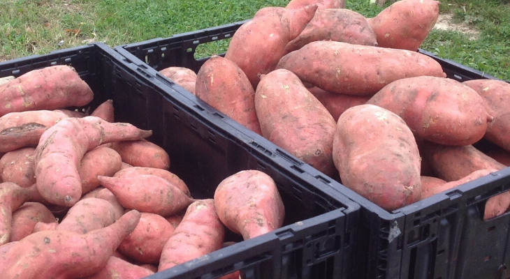 sweet potato held in black containers