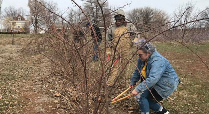 Photo credit Kelly Allsup. Gardeners prune brambles in late winter to help the plants produce more fruit in the growing season