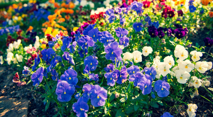 cool season blooms - photo by Terrance Raper on Unsplash