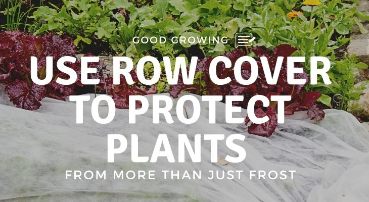Row cover protecting some lettuce