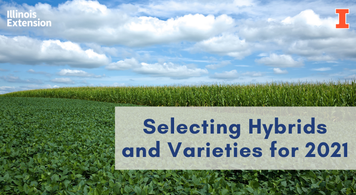 corn and soybean selection