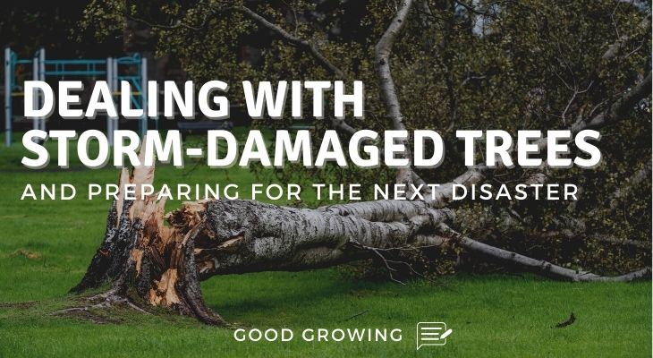 Storm Damaged Tree