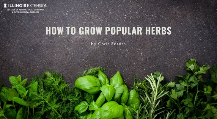 How to grow popular herbs