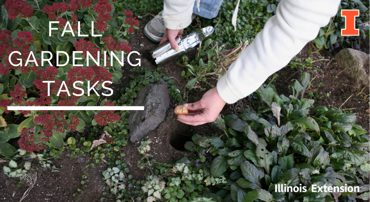 planting spring bulbs amongst fall perennials