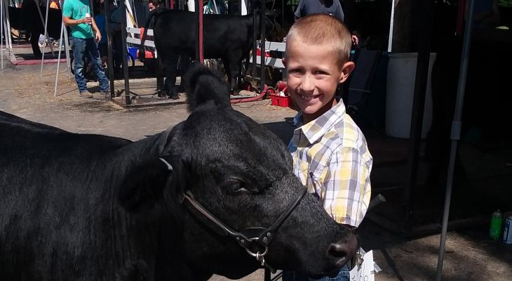 4-H member with black heifer