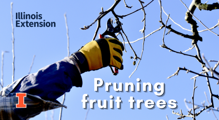 Person holding pruners getting ready to prune branch off a fruit tree