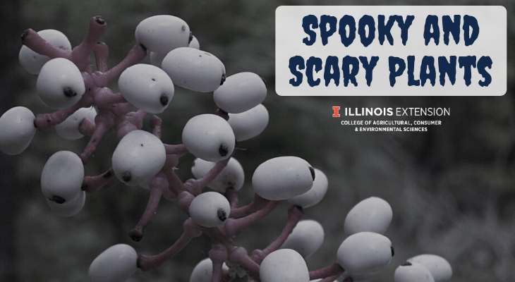 Spooky and Scary plants with doll's eyes plant berries