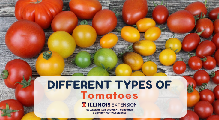 different types, sizes, and colors of tomatoes