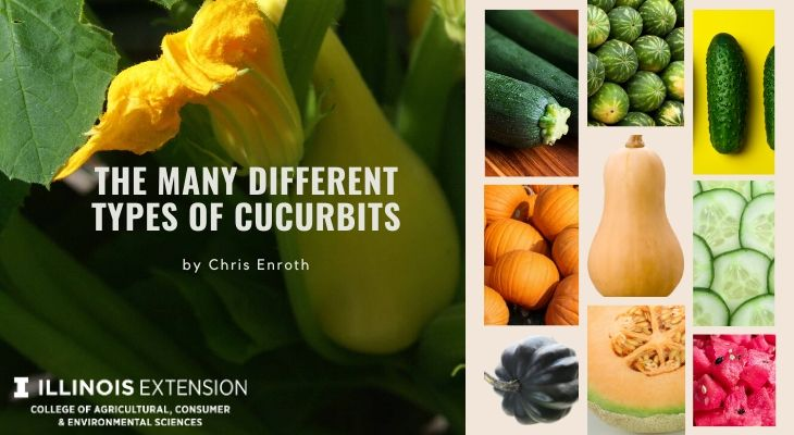 The Many Different Types of Cucurbits