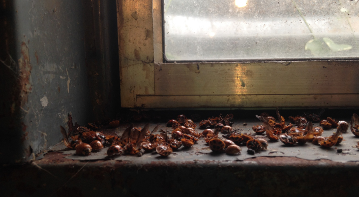 beetles dead on window sill