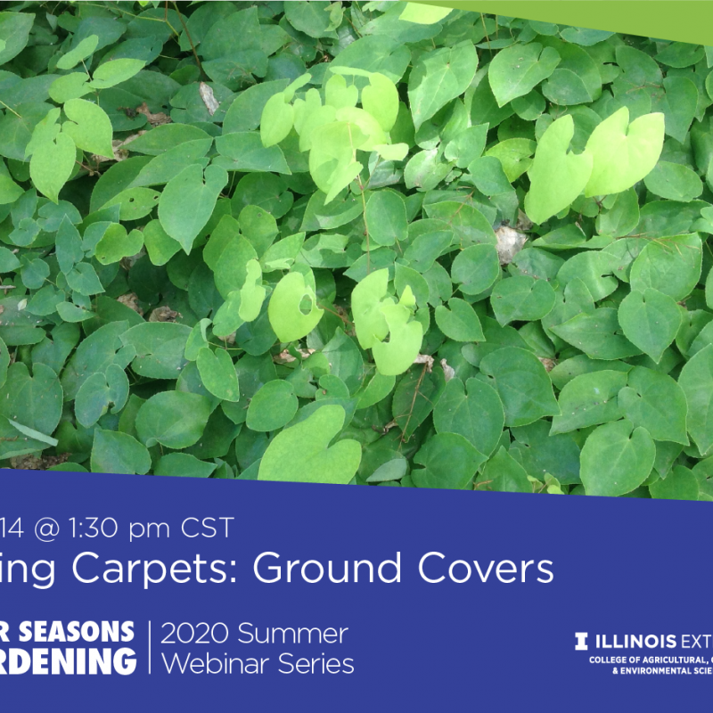 promotion for ground cover