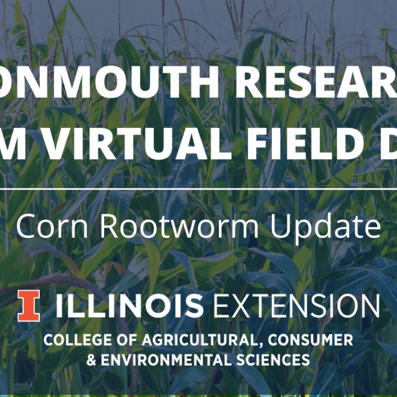 Graphic of corn rootworm update