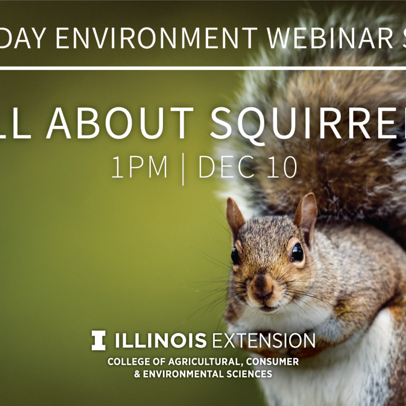 squirrel webinar