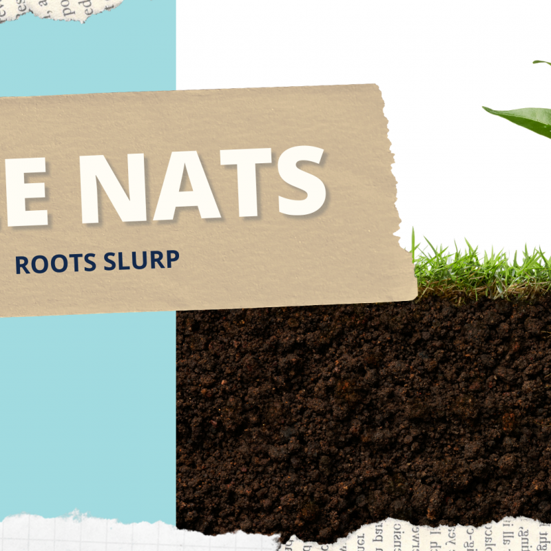 Wee naturalist graphic showing side view of plant and roots