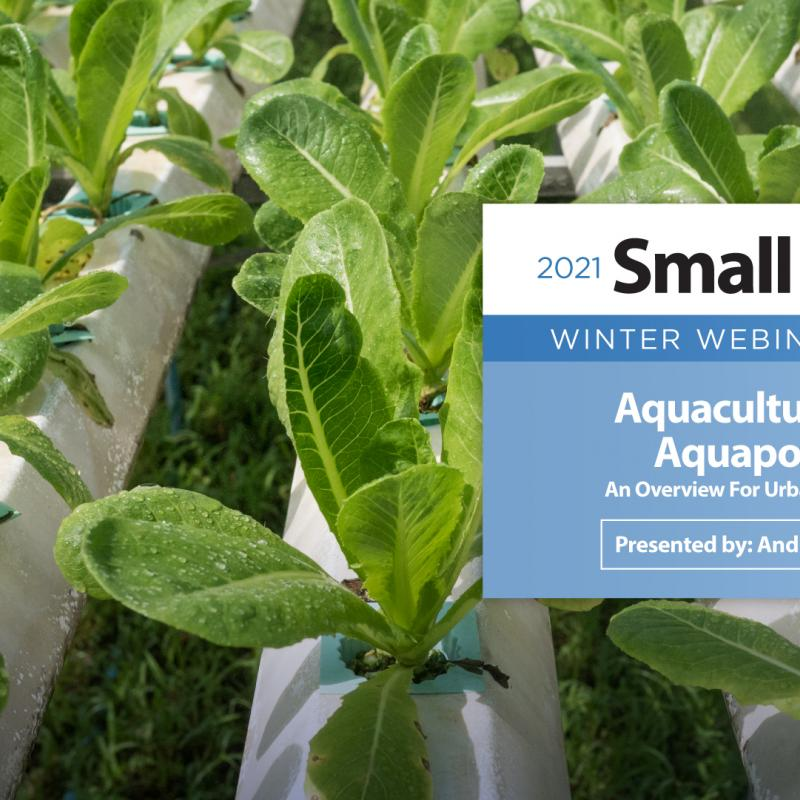 Aquaculture and Aquaponics: An Overview For Urban Agriculture