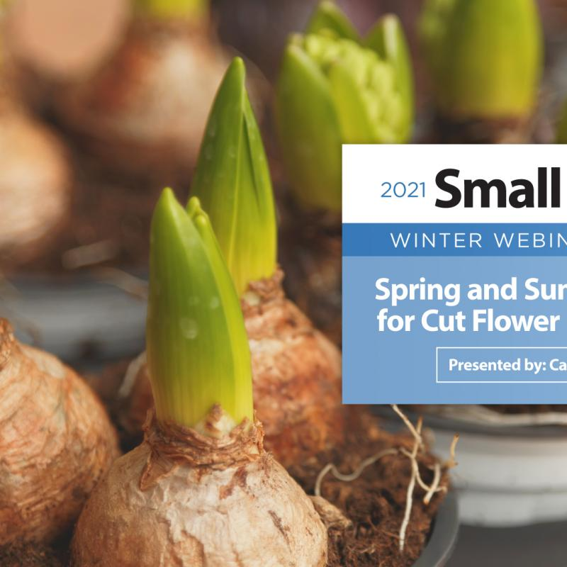 Spring and Summer Bulbs for Cut Flower Production