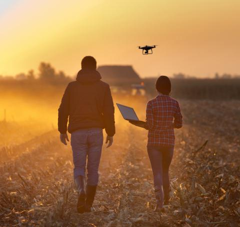 Man and woman walking in corn field at dusk during harvest with drone.