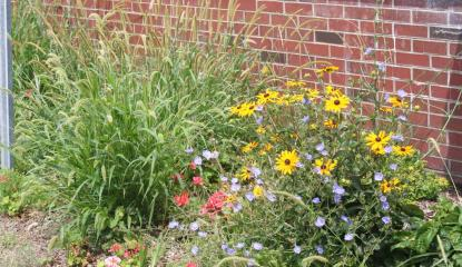 black eyed susans and ornamental grasses